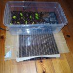 夏野菜の育苗 ピタリ適温プラスを使った自作育苗器