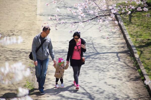 漫步櫻花樹下    2014.03.31 毛馬櫻之宮公園