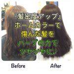 『髪密度アップ』ホームカラーで傷んだ髪をハーブの力でツヤツヤに♪《大阪千林守口》