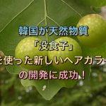 韓国が天然物質「没食子」を使った新しいヘアカラーの開発に成功!
