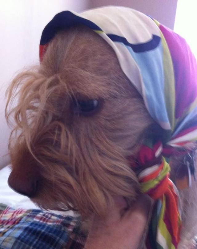 Chippy in Babushka