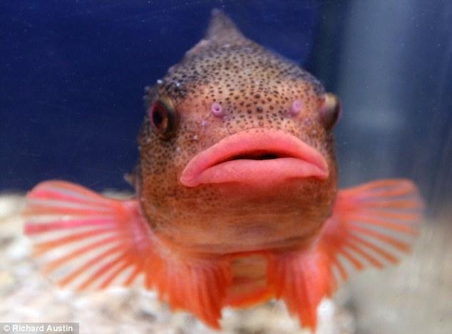Photo by Richard Austin. Fish Lips