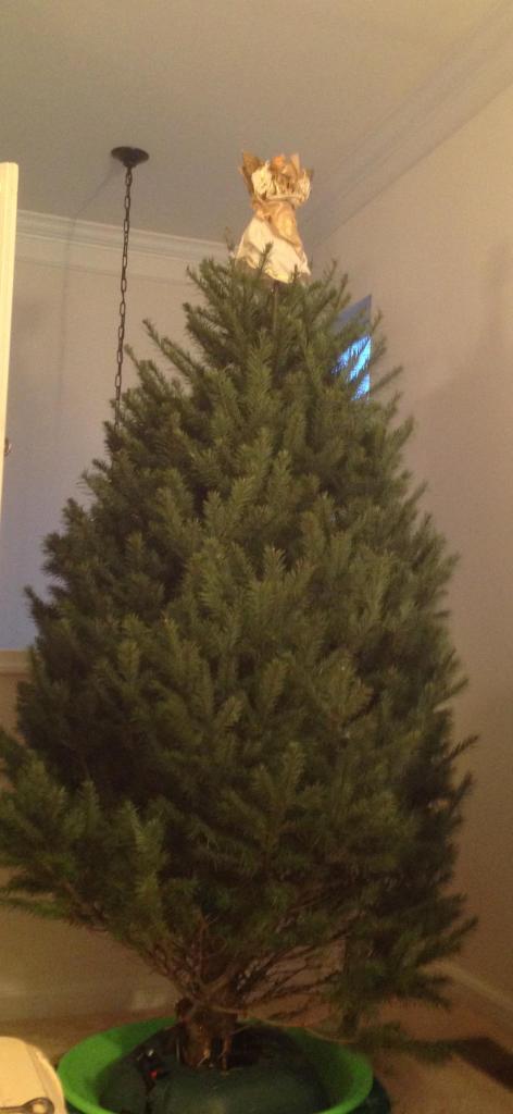 Tree bare