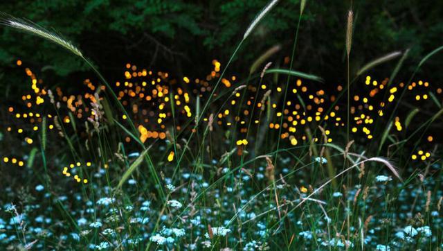 fireflies-opener