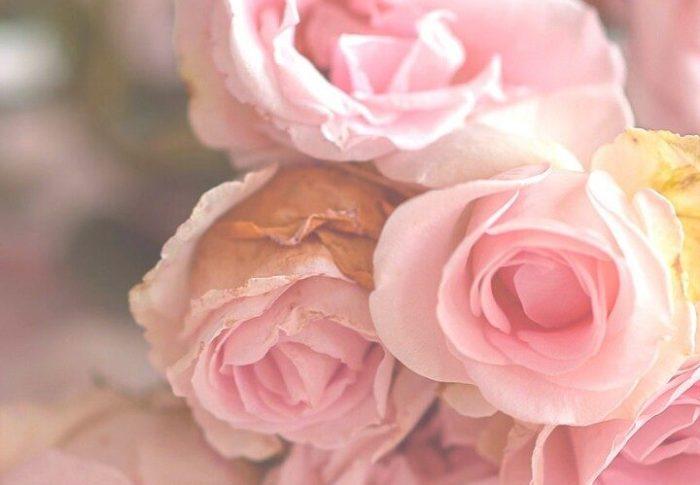 1, 2, 3, nous allons… cueillir des fleurs!