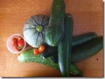 récolte au potager bio