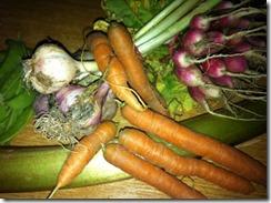 variété de carotte