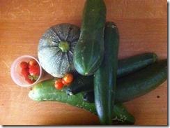 récolte-au-potager-bio.jpg