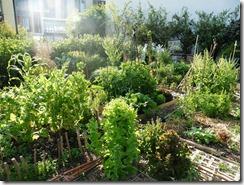 Parcelle individuelle des jardins partagés