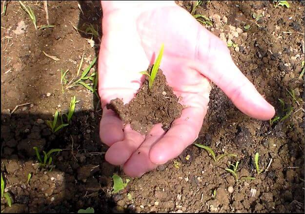 L'histoire de la permaculture