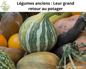 Légumes anciens au potager