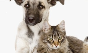 Intestinal worms in dogs and cats