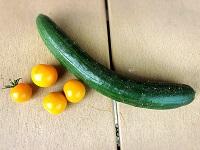 家庭菜園で採れた野菜を使用です。