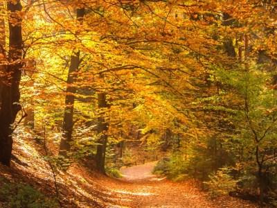Saveurs d'L'automne