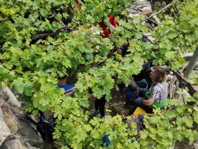 Picnic in Vigna con degustazione