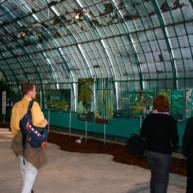 Michelle-Auboiron-expositions-Serres-d-Auteuil-Paris-2004--24 thumbnail