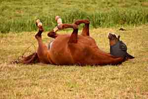 How To Keep Horse Flies Away From You And Your Horses