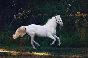 What are the advantages of leasing a horse?