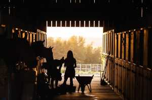 Side Hustle Ideas For Horse Lovers 2020