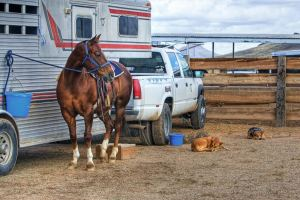 Where Can I Find a Horse Trailer Rental?
