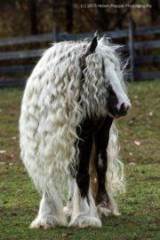 """""""splendide cheval tinker"""