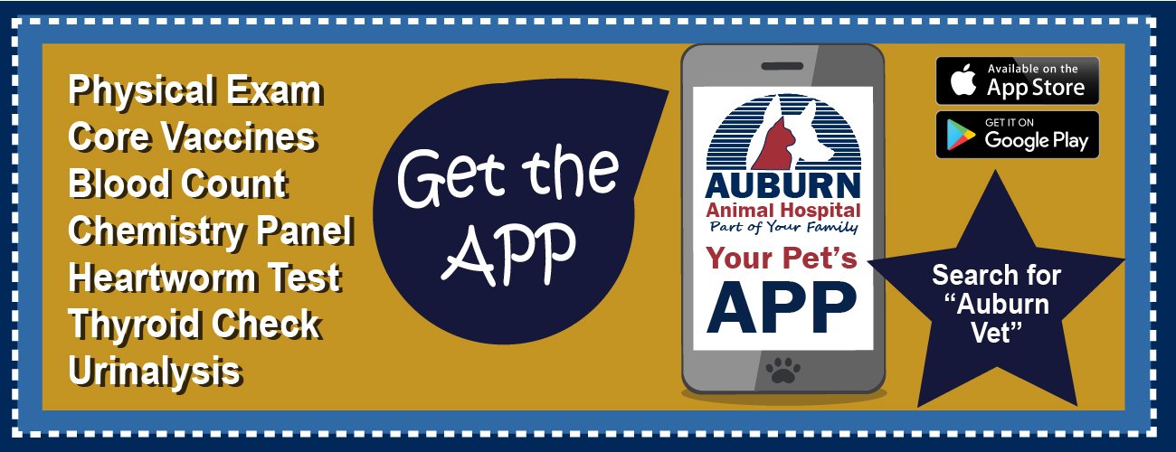 Get the Auburn APP on Google Play searh Auburn Vet