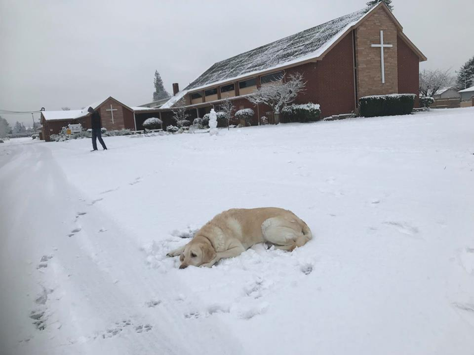 service dog snow, evris, snow church, auburn snow, white christmas