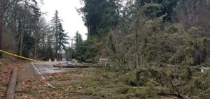 Pse, Puget sound energy, downed tree, downed powerline, storm damage