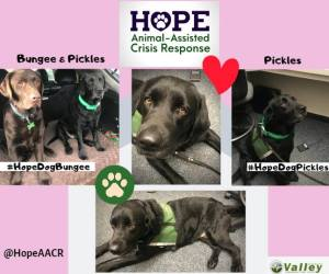 Hope Animal Assisted Crisis Response, therapy dogs, valley com, vcc, valley communications center, compassion fatigue, secondary trauma, 911 dispatcher mental health