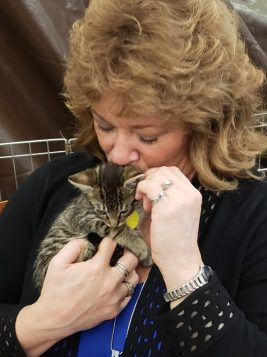 avhs, kitten, mayor backus, nancy backus, auburn wa, auburn valley humane society