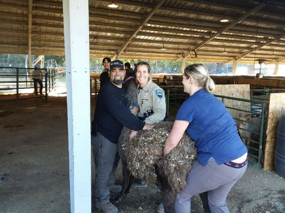 apd, animal control, sarah Cattaneo, butte county, animal control, Gridley Animal Shelter , Gridley fairgrounds