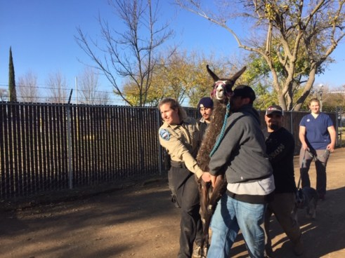 apd, animal control, sarah Cattaneo, butte county, animal control, Gridley Animal Shelter , Gridley fairgrounds, wildfire