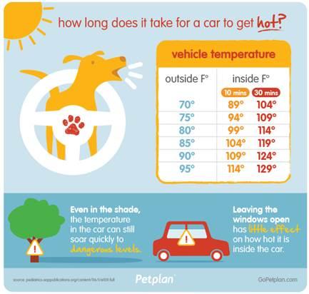 dog in car, hot car dog, car temperature