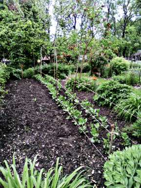 JardinCureRiviere2