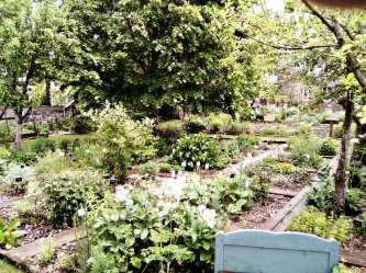 JardinCureRiviere6