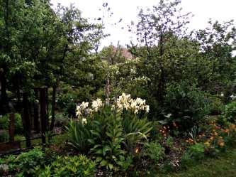 JardinCureRiviere7