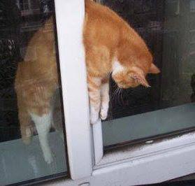 Les fenêtres oscillo-battantes, mortelles pour nos animaux