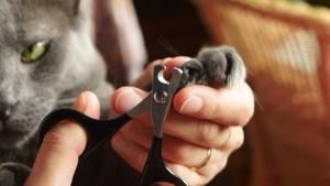 Comment couper les griffes de votre chat
