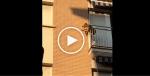Désespéré, un chien saute d'un balcon !