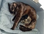 SOS URGENT : danger de mort pour 3 chats dans un quartier dangereux, un déjà mort !