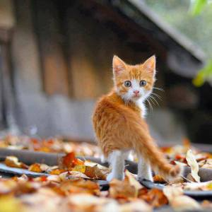 Campagne de stérilisation des chats errants : 17 janvier