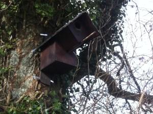little-owl-box