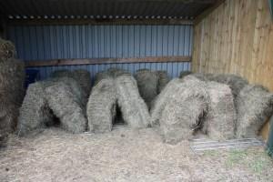 hay drying