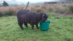 Ymogen and her bucket Friday 8 days