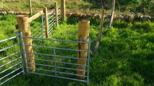 sheep handling area treatment pen