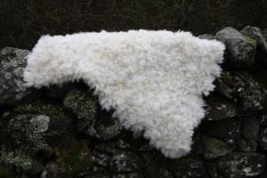 sheep friendly sheepskin rugs