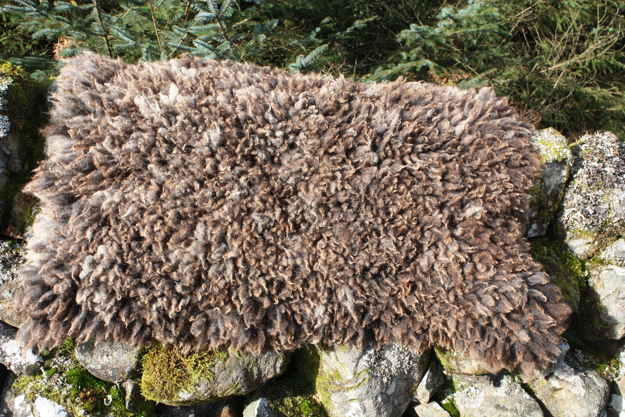 cruelty free sheepskin rugs