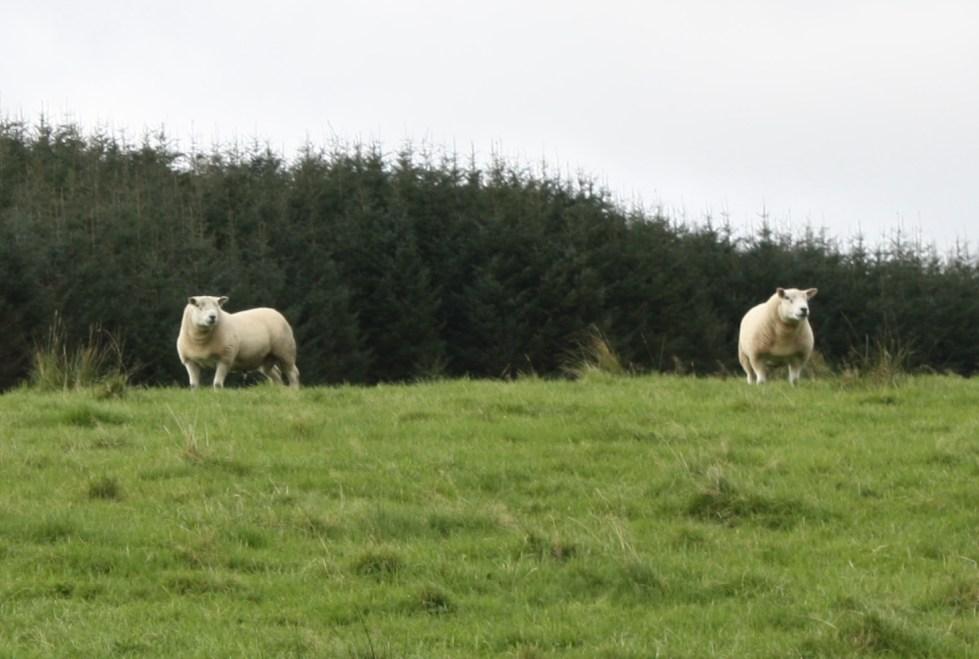 tups in field next door