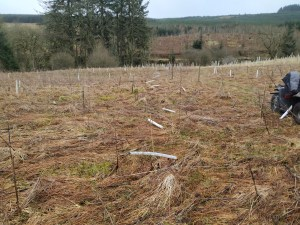 tree planting in progress
