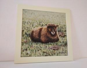 Pictures of Coloured Ryeland sheep - Yoko mounted